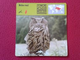 ESPAGNE SPAIN FICHA SHEET FICHE ANIMALES ANIMAL FAUNA WILDLIFE BIRD BÚHO LECHUZA O SIMIL OWL HIBOU BÚHO REAL BIRDS VER F - Animales