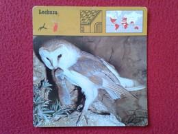 ESPAGNE SPAIN FICHA SHEET FICHE ANIMALES ANIMAL FAUNA WILDLIFE BIRD BÚHO LECHUZA O SIMIL OWL HIBOU LECHUZA BIRDS VER FOT - Animales