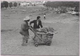 CPM - TANGER - AÏD El ADHA - La Carriole (1978) - Photo Edition Yvon Kervinio - Tanger