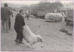 CPM - TANGER - AÏD El ADHA - Le Transport Du Bélier (1978) - Photo Edition Yvon Kervinio - Tanger