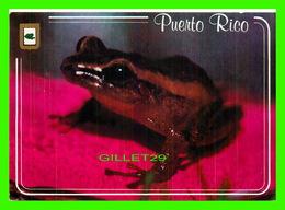 ANIMAUX - GRENOUILLE COQUI - SYMBOLE DE PUERTO RICO - CIRCULÉE EN 1987 - - Animaux & Faune
