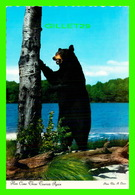 ANIMAUX - BLACK BEAR - HERE COME CHOSE TOURISTS AGAIN -  PHOTO CHOS A. DEXTER - - Ours