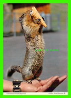 ANIMAUX - ÉCUREUIL - COLUMBIAN GROUND SQUIRREL WITH ICE CREAM - BYRON HARMON PHOTOS - - Animaux & Faune
