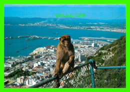ANIMAUX - SINGES - ROCK BABY APE, GIBRALTAR -  ROCK PHOTOGRAPHIC SERVICE - - Singes
