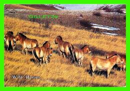 ANIMAUX - CHEVAUX - WILD HORSES - TAKHI, WILD PRZEWALSKI HORSES, MONGOLIA - TRAVEL - - - Chevaux