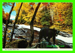 ANIMAUX - BEARS, OURS - DENIZEN OF THE CANADIAN WOODS - THE BLACK BEAR - - Ours