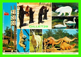 ANIMAUX - BEARS, OURS - ASSINIBOINE PARK ZOO, WINNIPEG - MULTIVUES OF ANIMALS - WILSON'S SUPERB - - Ours