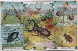 Chromos - Santé Le Fer Larcade 151 Rue Lafayette Paris - Insectes - Scarabées Doryphore Lucane - Cromos