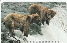 Australia - Bears Fishing - 2G9568 - Australie
