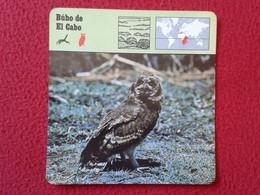 ESPAGNE SPAIN FICHA SHEET FICHE ANIMALES ANIMAL FAUNA WILDLIFE BIRD BÚHO LECHUZA O SIMIL OWL HIBOU BÚHO DEL CABO BIRDS - Animales