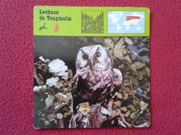 ESPAGNE SPAIN FICHA SHEET FICHE ANIMALES ANIMAL FAUNA WILDLIFE BIRD BÚHO LECHUZA O SIMIL OWL HIBOU LECHUZA DE TENGMALM - Animales