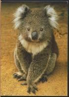 °°° 13057 - AUSTRALIA - KOALA - 2010 With Stamps °°° - Altri