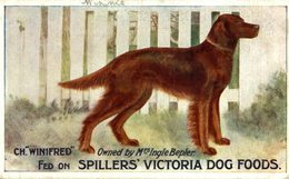 VERY RARE   FED ON  SPILLERS VICTORIA DOG FOODS CH WINIFRED - Publicidad