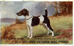 VERY RARE   FED ON  SPILLERS VICTORIA DOG FOODS  CH ALPORT DERBY  DOG HOND PERRO - Publicidad