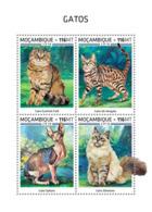 Mozambique  2018   Cats Fauna    S201812 - Mozambique