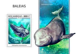 Mozambique  2018   Whales   Fauna  S201812 - Mozambique