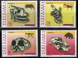 Macedonia 1998. Fauna. Archaeology. Prehistory, Skull.  MNH - Archeologia
