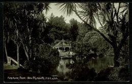 Ref 1265 - 3 Early Real Photo Postcards - Pukekura Park - New Plymouth New Zealand - New Zealand