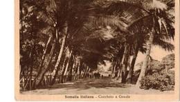 SOMALIA ITALIANA - COCCHETO A GENALE - Somalia