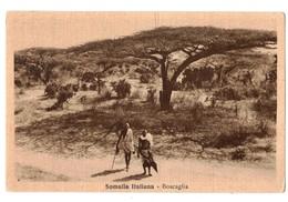 SOMALIA ITALIANA - BOSCAGLIA - Somalia