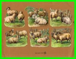 Six Chromos Découpis Théme Mouton/.bélier /chévre (recto Verso) - Tiere