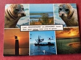 Nederland Waddenzee En Zeehond 1983 - Dieren