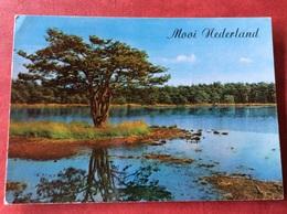 Nederland Mooi Nederland - Bomen