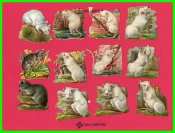Douzes Chromos Découpis Souris Blanches Rats (recto Verso) - Animaux