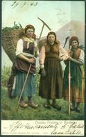 CARTOLINA - CV427 FRIULI Costumi Friulani In Montagna, FP Viaggiata 1903, Ottime Condizioni - Udine