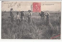 CPA- Viêt-Nam- La Culture Du Riz- 1905-2scans - Viêt-Nam