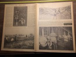 ANNEES 20/30 LA CHICOREE TORREFACTION DES RACINES MAGDEBOURG VAN SEYNHAEVE SAINT JEAN BERCHMANS AVELGHEM - Verzamelingen