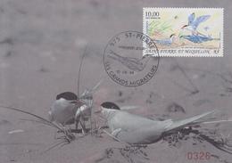 Carte  Maximum  1er  Jour   SAINT  PIERRE  Et   MIQUELON   Les  Oiseaux  Migrateurs  :  La  Sterne  Arctique  1995 - Cartes-maximum