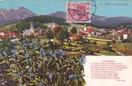 Carpathes - Pologne - Krummhübel Im Riesengebirge - Flora: Enzian Gentiana Pneumananthe - 1913 - Poland
