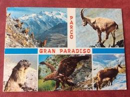 Nederland Parco Gran Paradiso - Vogels