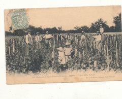 89 // SAINTS    Vigne De La Puisaye  148 - Sonstige Gemeinden