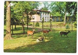 SC-1770  ODENSE :Motel Brasilia ( With Deer Park, Hertenpark) - Danemark