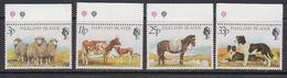 Falkland Islands 1981 Farm Animals 4v (+margin)  ** Mnh (41746B) - Falklandeilanden