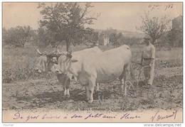 OP10-  LE LOT-ET-GARONNE PAYSAN AU LABOUR AGRICULTURE METIER LABOURAGE ATTELAGE BOVINS -PERRET AGEN - 1903 - 2 SCANS) - France