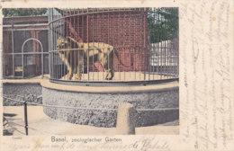 Basel (Suisse) - Zoologister Garten - Lion - BS Bâle-Ville