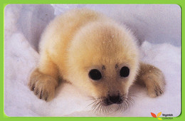 Voyo GERMANY SATTELROBBE Arktische Tierwelt Used Phone Card 12DM 09/2005 Eurochip - Duitsland