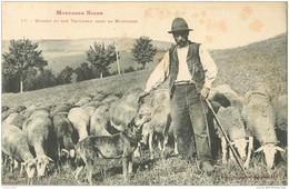 81 TYPES DU TARN. Berger Et Son Troupeau De Brebis En Montagne Noire Vers 1900 - France