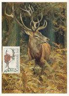 D35957 CARTE MAXIMUM CARD 1957 CZECHOSLOVAKIA - CERF STAG HIRSCH CP ORIGINAL - Gibier