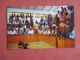 Cockfighting St Maarten   Netherland Antilles > Saint-Martin Ref 3146 - Saint-Martin