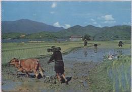 CPM - HONG-KONG - THE CHINESE FARMERS Very Busy ...  - Edition National Co - Cina (Hong Kong)