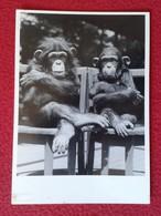 POSTAL POST CARD CARTE POSTALE POSTCARD MONOS EN SILLAS MONKEY DOUBLE 1989 ARMSTRONG ROBERTS MONKEY SIMIO APE MONOS VER - Monos