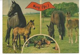 Norg (Dr) Jument Et Son Poulain - Pferde