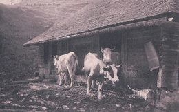 Les Rochers De Naye, Sortie Des Vaches Du Chalet D'alpage (67) - VD Vaud