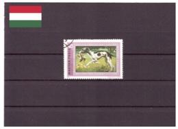 Hongrie 1972 - Oblitéré - Chiens - Michel Nr. 2742A (hun226) - Hungary