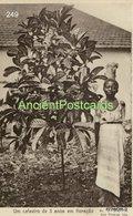 249 Sao Tome And Principe - S. Tomé Um Cafeeiro De 3 Anos Em Floração- Edição De Jose Pimenta, Lda. - Sao Tome Et Principe