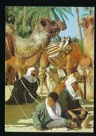 Sud Tunisien - Chameliers [AA32-1.600 - Tunisie